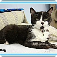 Adopt A Pet :: Kay - New Richmond,, WI