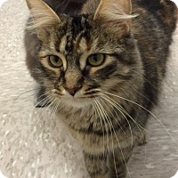 Adopt A Pet :: Cinnamon - Byron Center, MI