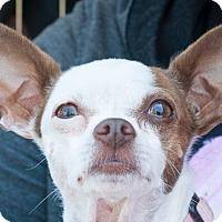 Adopt A Pet :: Mila - San Marcos, CA