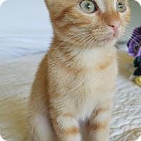 Adopt A Pet :: Quin - Duluth, GA