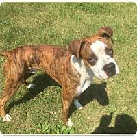 Adopt A Pet :: Rocky - Brentwood, TN