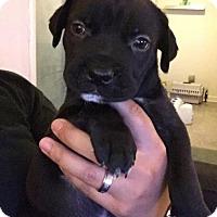 Adopt A Pet :: Harris - Fort Lauderdale, FL