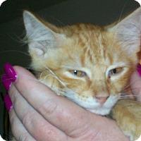 Adopt A Pet :: Nato - Mexia, TX