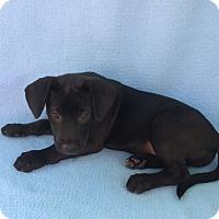 Adopt A Pet :: Mango - East Sparta, OH
