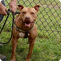 Adopt A Pet :: Clover - Yonkers, NY