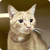 Adopt A Pet :: Trickster - Kettering, OH