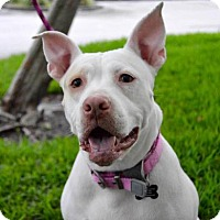 Adopt A Pet :: Polar - Plant City, FL