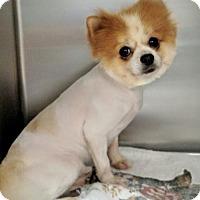 Adopt A Pet :: Charlemagne - Newark, DE