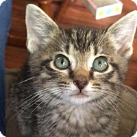 Adopt A Pet :: Kade - Wilmore, KY