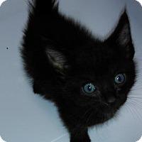 Adopt A Pet :: Thaddious - Parma, OH