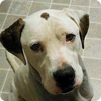 Adopt A Pet :: Marmaduke - Salem, WV