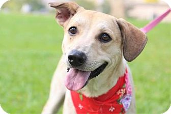 Cattle Dog Mix Dog for adoption in San Francisco, California - Tammy
