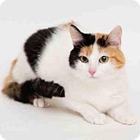 Adopt A Pet :: MISSY - San Francisco, CA