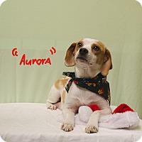 Adopt A Pet :: AURORA - Poteau, OK
