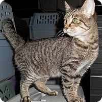 Adopt A Pet :: Linda - Chattanooga, TN