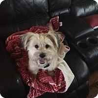 Adopt A Pet :: Jada + - Santa Fe, TX