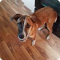 Adopt A Pet :: Azalea - New Oxford, PA
