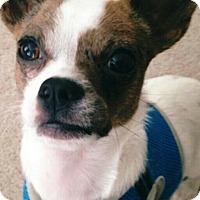 Adopt A Pet :: Titan - Newnan, GA