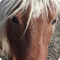 Adopt A Pet :: Ariel - Loudon, TN