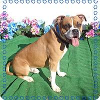 Adopt A Pet :: ZIGGY - Marietta, GA