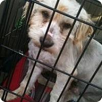 Adopt A Pet :: Trent - Justin, TX
