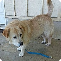 Adopt A Pet :: Janie - Brattleboro, VT