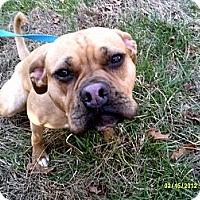 Adopt A Pet :: Gucci - Dundas, VA