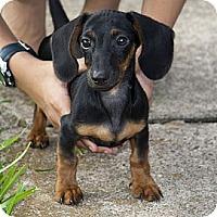 Adopt A Pet :: Chris - Houston, TX