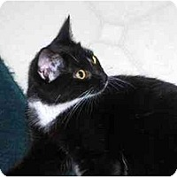 Adopt A Pet :: Kara - Richmond, VA