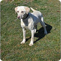Adopt A Pet :: Bradford - Lewisville, IN