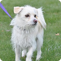 Adopt A Pet :: Bear - Tumwater, WA