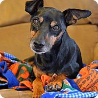 Adopt A Pet :: Spunky - Nashville, TN