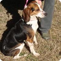 Adopt A Pet :: Porter - Dumfries, VA