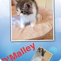 Adopt A Pet :: O'Malley - McDonough, GA