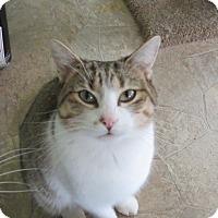 Adopt A Pet :: Yardley - Grand Chain, IL