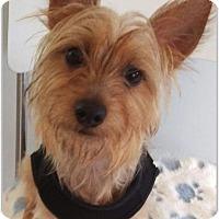 Adopt A Pet :: Reecey - Hampton, VA