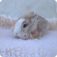 Adopt A Pet :: Apple Dumpling - Watauga, TX