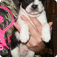 Adopt A Pet :: willie - mooresville, IN