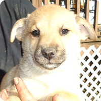 Adopt A Pet :: Gaven - Plainfield, CT