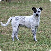 Adopt A Pet :: Rylee - Lufkin, TX