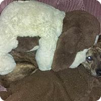 Adopt A Pet :: TINKER - Dayton, OH