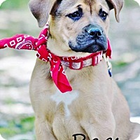 Adopt A Pet :: Rags Adoption pending - Manchester, CT