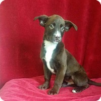 Adopt A Pet :: Avery - Chester, IL