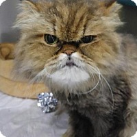 Adopt A Pet :: LOLA - Powder Springs, GA
