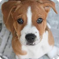 Adopt A Pet :: Myrtle - Washington, DC