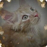Adopt A Pet :: Rauri - Trevose, PA