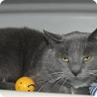 Adopt A Pet :: Great Catsby at Hazel Park - Warren, MI
