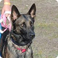Adopt A Pet :: Hazel - Cape Coral, FL