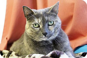 Domestic Shorthair Cat for adoption in Portland, Oregon - Gracie