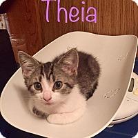 Adopt A Pet :: Theia - Irwin, PA